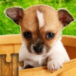 Dogs Jigsaw Puzzles Game – For Kids & Adults 🐶 28.2 (MOD, Unlimited Money)