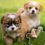 Dogs & Cats Puzzles for kids & toddlers 2 🐱🐩 2021.44 (MOD, Unlimited Money)