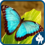 Butterfly Jigsaw Puzzles  (MOD, Unlimited Money)1.9.18