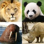 Animals Quiz – Learn All Mammals and Dinosaurs! 3.2.0 (MOD, Unlimited Money)